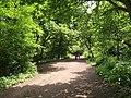 Path on Hampstead Heath - geograph.org.uk - 1916802.jpg