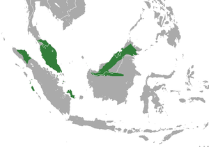 Pen-tailed Treeshrew area.png