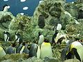 Penguins Loro Parque 08.JPG