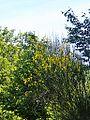 Peraldaccio-paesaggio 17.jpg