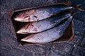 Pesca de atún.jpg