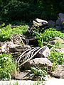 Pflanze aus dem Botantischen Garten Erlangen 6.jpg