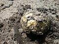 Piaskowiec modrzak 5.jpg