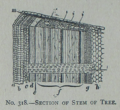 Picture Natural History - No 318 - Section of Stem of Tree.png