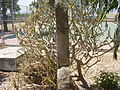 PikiWiki Israel 13645 Abraham Juri memorial in Kibbutz Yad Hanna.jpg