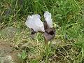 PikiWiki Israel 42123 Iris Hermona.JPG