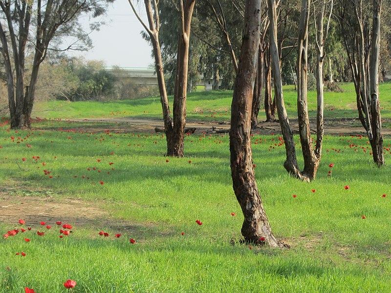 אדום ביער