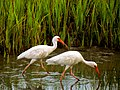 Pinckney Island National Wildlife Refuge (5958494300).jpg