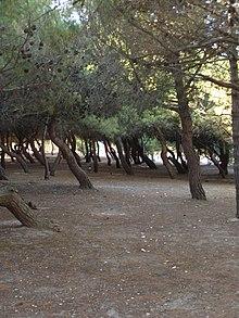 Porto sant 39 elpidio wikipedia - Ristorante il giardino porto sant elpidio ...