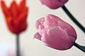 PinkTulip(bokeh).jpg