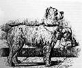 Pinscher 1884.jpg