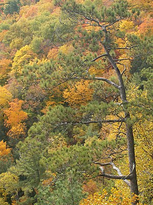 Eastern Great Lakes lowland forests - Cap Tourmente National Wildlife Area in Quebec in fall