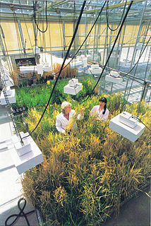 Department of Plant and Microbial Biology