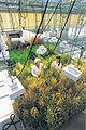 Plant Gene Expression Center.jpg