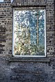 Plant Growing Within A Window (between the panes of glass) - panoramio.jpg