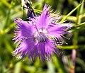 Plant in Spain 2.jpg