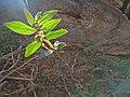 Planta sobre o Sol.jpg