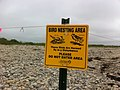 Plover Tern Sign.JPG