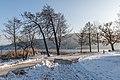 Poertschach Halbinselpromenade Landspitz Baeume 19012017 6145.jpg