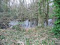 Pond in the woods, near Hode Farm - geograph.org.uk - 341500.jpg