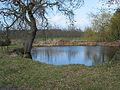 Pond on Hampton Park Road - geograph.org.uk - 723490.jpg