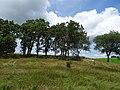 Pope Farm Conservancy - panoramio - Corey Coyle (21).jpg