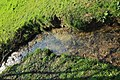 Prairie de Jaumeron à Gif-sur-Yvette le 29 avril 2015 - 10.jpg