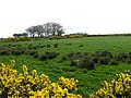 Priestsessagh Townland - geograph.org.uk - 406957.jpg