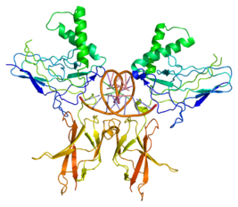 Protein NFKB2 PDB 1a3q.png