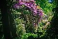 Pszczyna Rhododendron Trees.jpg