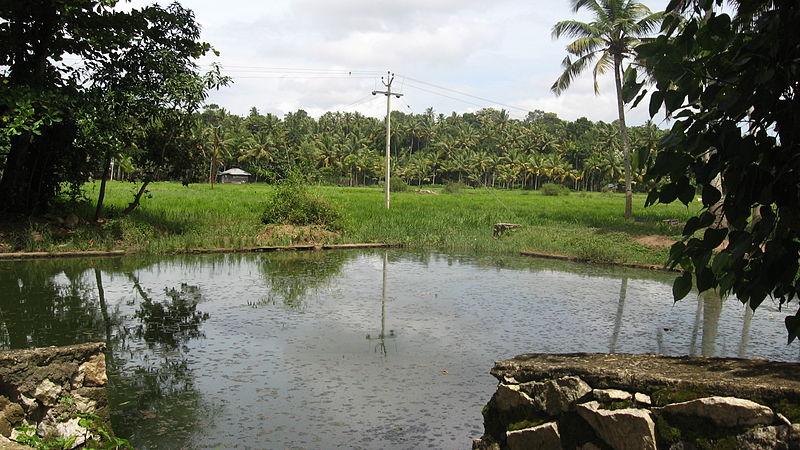 File:Punthalathazham mangalathu pond.JPG