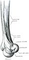 Quain's elements of anatomy (1891) - Vol2 Part1- Fig 092.png