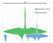 Quetzalcoatlus on human porportions