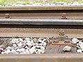 Rail Micheville II 70.jpg