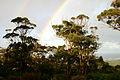 Rainbow and karri trees, Denmark WA.jpg