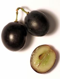 taninos en uvas blancas y diabetes