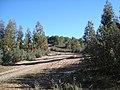 Raspaero pinos de reina - panoramio.jpg