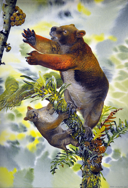 Reconstruction of Nimbadon lavarackorum mother and juvenile - journal.pone.0048213.g002.png