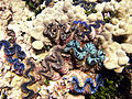 Reef2298 - Flickr - NOAA Photo Library.jpg