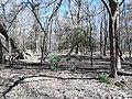 Remains of the garden area, Lexington.jpg