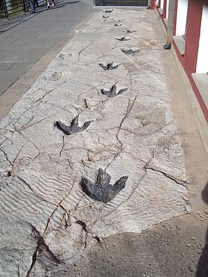 Footprint - Replica of dinosaur footprints found in La Rioja