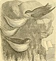 Reptiles and birds - a popular account of the various orders; with a description of the habits and economy of the most interesting (1869) (14746509144).jpg