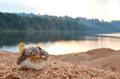 Reserva Biologica do Rio Trombetas, Autor Fábio Andrew Gomes Cunha.png