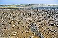 Ria Formosa - Cabanas - Portugal (45720098561).jpg