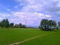 Rice Farm in Terai.jpg