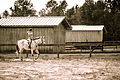 Riding lessons in Covington Louisiana - Aimee & Lark.jpg