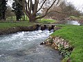 River Ebble near Odstock Church - geograph.org.uk - 331490.jpg
