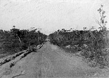 Historical photograph of narrow road surrounded by bush vegetation