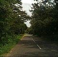 Roads between forests in Sri Lanka.jpg
