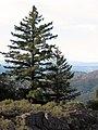 Robert Louis Stevenson State Park 2.jpg